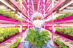 lowongan pertanian di jepang